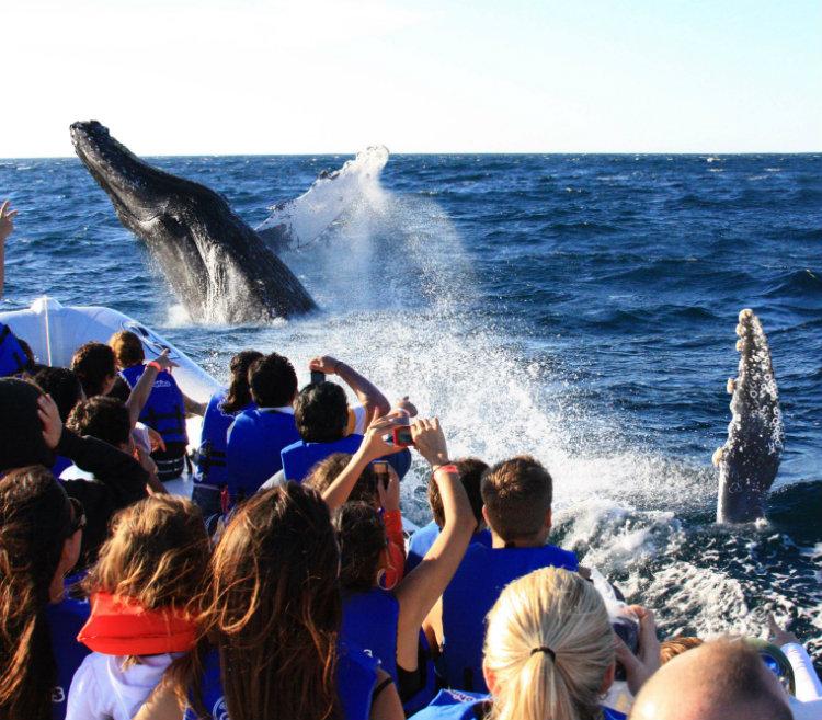 L'observation des baleines