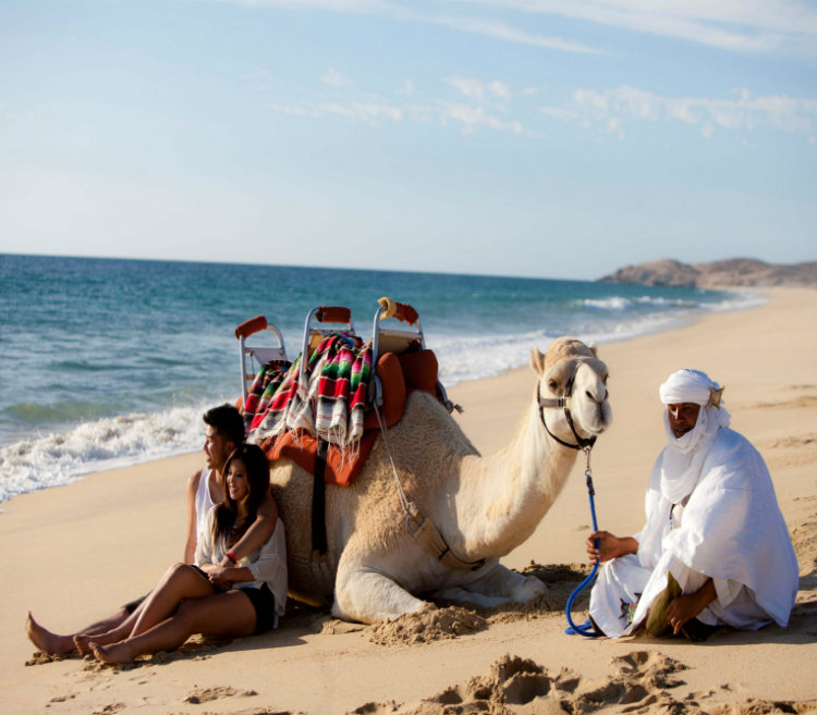 Safari sobre camelos - Grand Velas Los Cabos Mexico