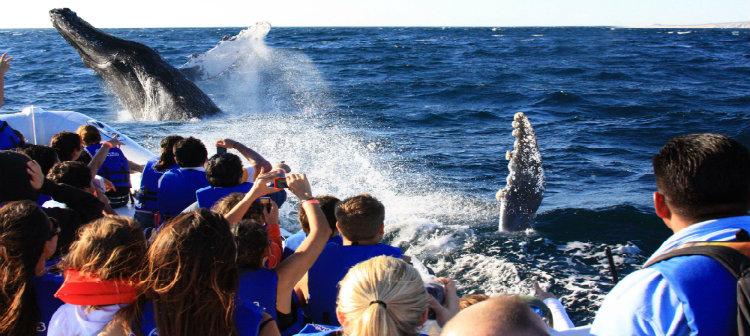 Avistamento de baleias - Los Cabos Mexico, Grand Velas
