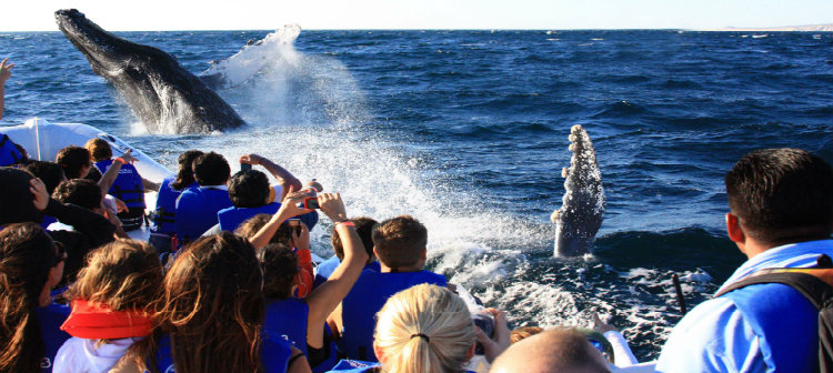Whale Watching in Los Cabos - Grand Velas